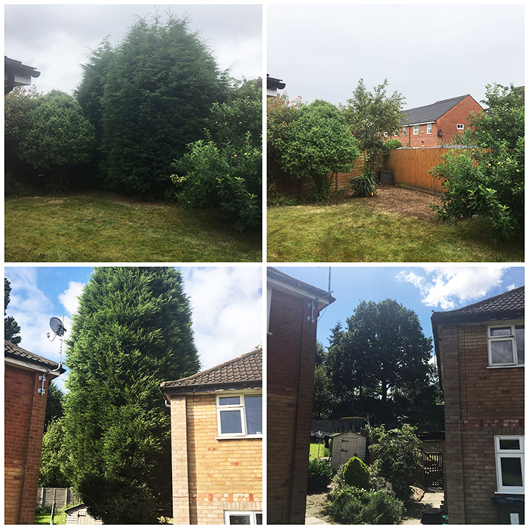 Conifer Trees Removed in Sutton Coldfield