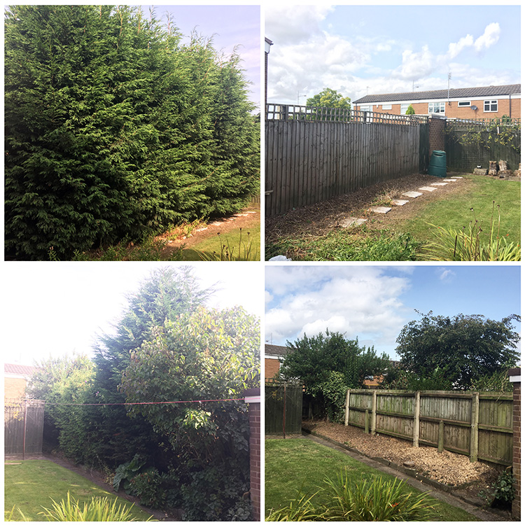 Conifers Removed in Castle Bromwich