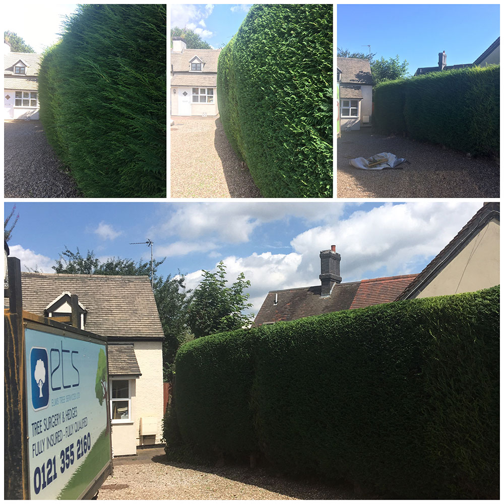 Hedges trimmed in Tamworth