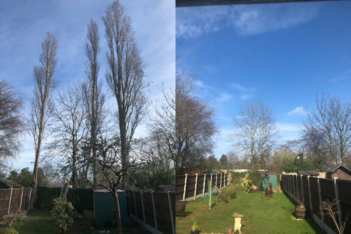 3 popular trees take down today from Sutton Coldfield