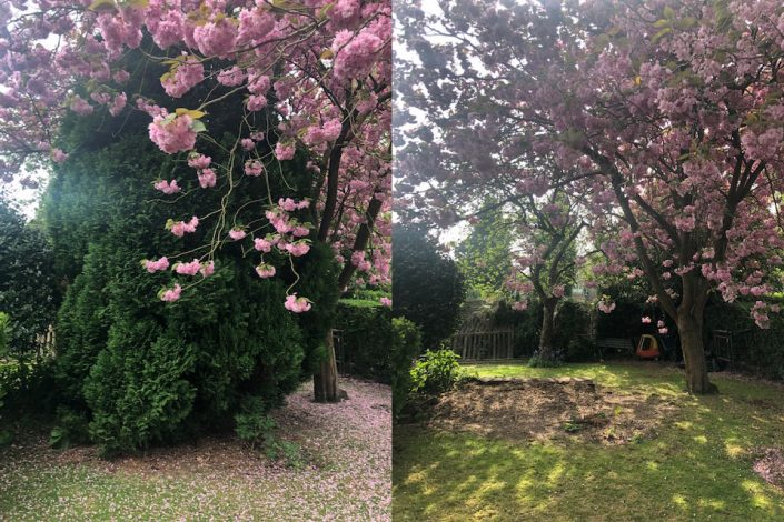 Before & after of a small conifer removed in Sutton Coldfield