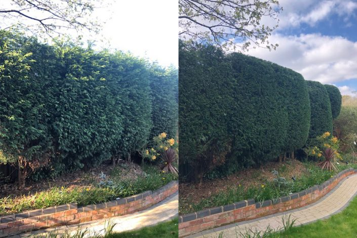 Conifer hedge trimmed in walmley ready for the summer